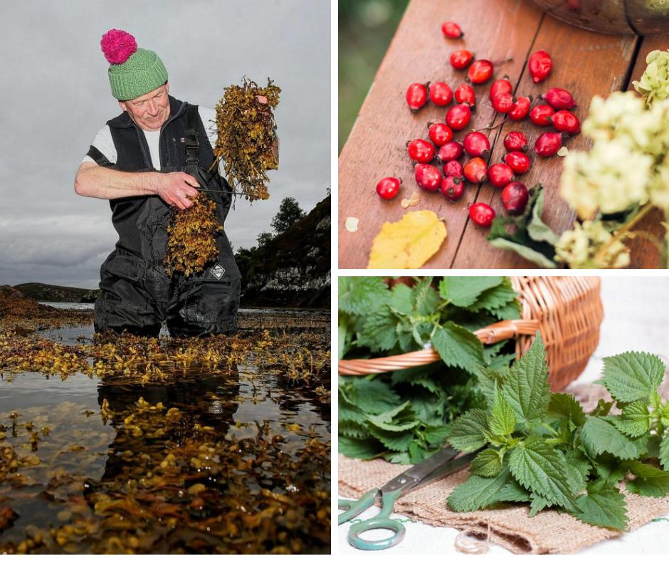 Scotland's superfoods: the health-giving ingredients growing on your doorstep